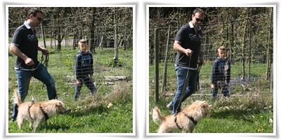 Hunde Alltagstraining Bodensee, Hausbesuche Hunde See, Hundezentrum Baden Württemberg