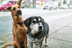 Beratung Hund See, Hundetraining Baden Württemberg, Leistungen Hund See