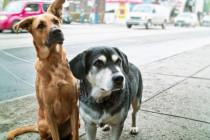 Grunderziehung Bodensee, Hunde Alltagstraining Bodensee, Ersthund Bodensee